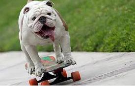 Skateboard como aprender